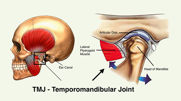 Temporomandibular Joint Disc